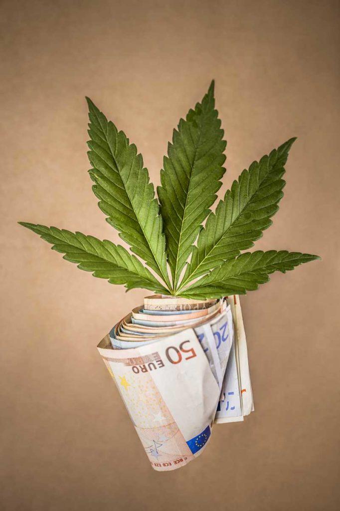 Industria de la marihuana, el negocio de la marihuana
