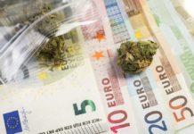 La importancia económica de la marihuana