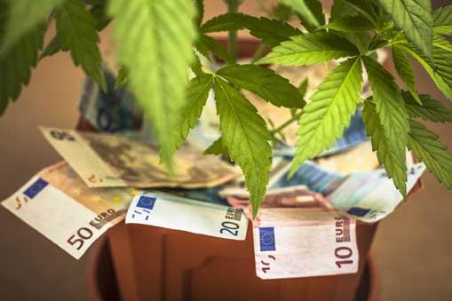 Industria de la marihuana