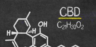 CBD o Cannabidiol el cannabinoide más conocido