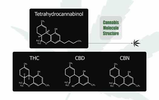 CBD o Cannabidiol en Cannabinoide de Moda