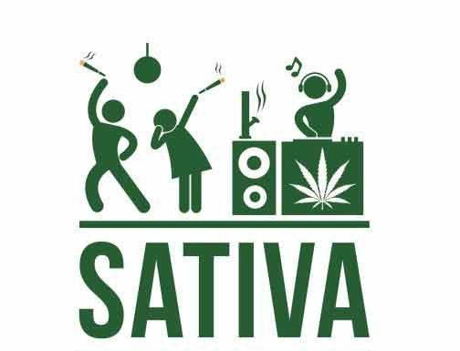 semillas de marihuana sativas