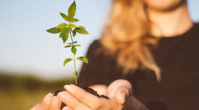 La marihuana puede ayudar a las mujeres