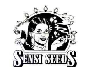 banco de semillas de marihuana Sensi Seeds