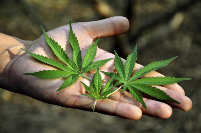 Marihuana usada una vez vaporizada