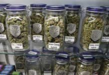 Diferentes usos de la Marihuana