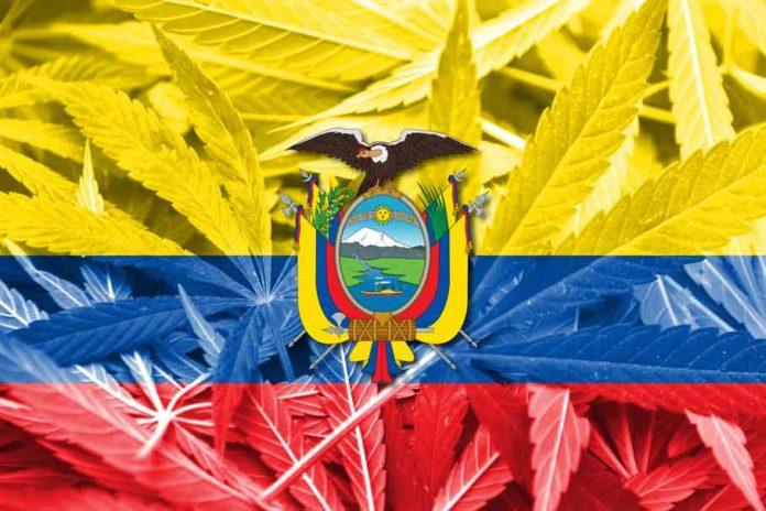 Ecuador y la Marihuana Medicinal Terapéutica