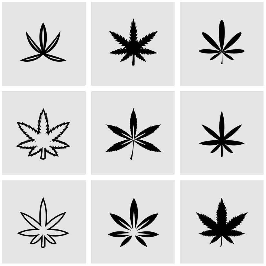 Planta de Marihuana - Mariguana - Cannabis - Weed - Hemp - Yerba