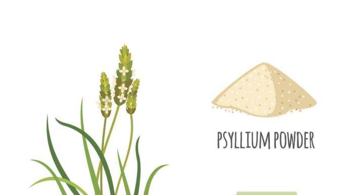 Psyllium - Plantago Ovata