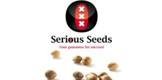 Banco de Semillas de Marihuana Serious Seeds