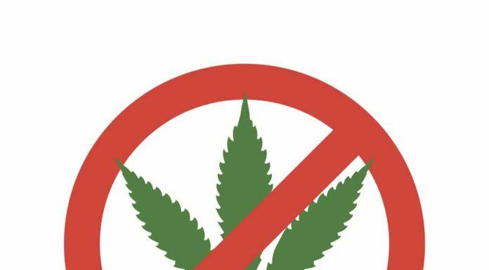 Marihuana Ilegal - No Legalización de la Marihuana