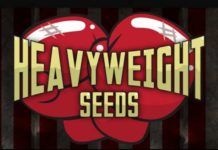 Banco de Semillas de Marihuana Heavyweight Seeds
