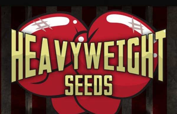 Banco de Semillas de Marihuana Heavyweight Seeds