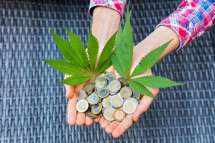 Importantes Beneficios de la Planta de Marihuana
