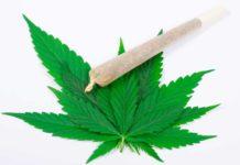 Fumar Marihuana Efectos sobre el cuerpo - Efectos Fumar Marihuana