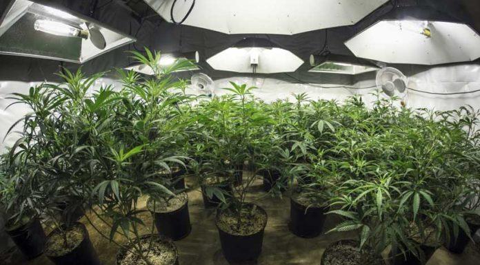 Cultivo de Marihuana en Interior