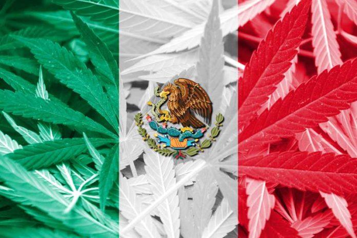 Legalización de la marihuana medicinal en México