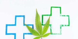 La Planta de Marihuana ¿Puede reconfigurar las células?