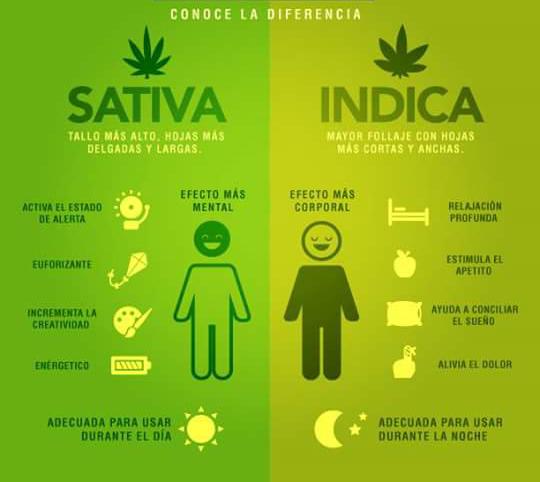 Diferencias entre plantas de marihuana Indicas y Sativas