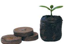 Cómo germinar semillas de marihuana en Jiffy paso a paso