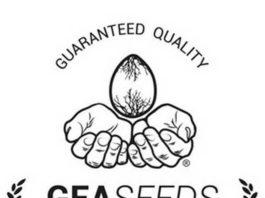 Banco de Semillas de Marihuana Gea Seeds