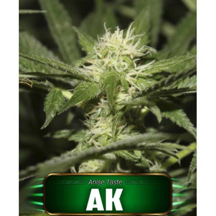 Semilla de Marihuana Ak de Gea Seeds