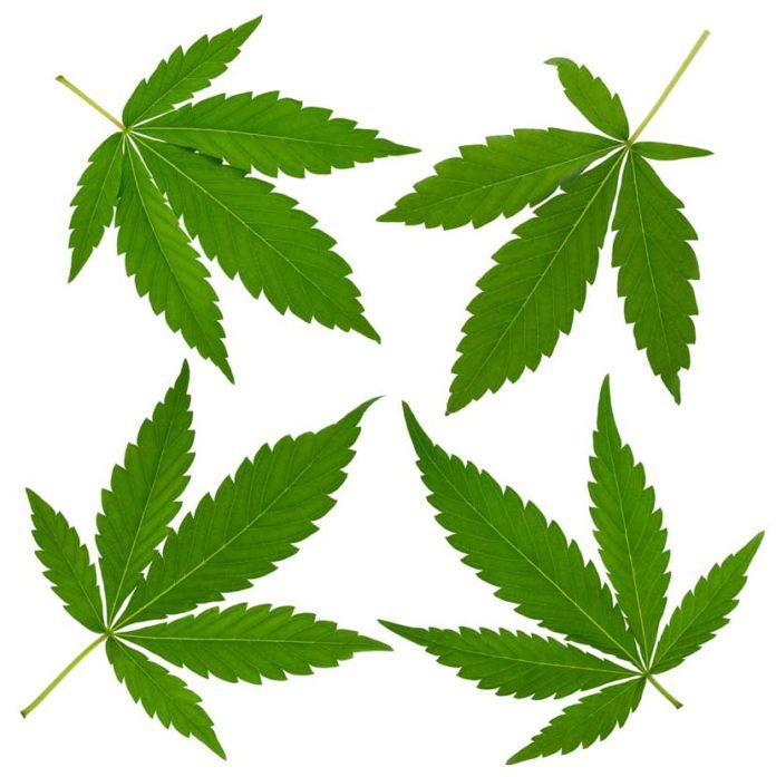 Se consume más Marihuana en EEUU que nunca