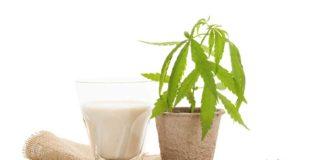 Leche con Marihuana - Leche con Marihuana rica en CBD