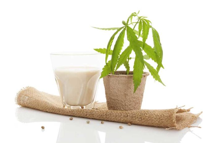 Leche con Marihuana, el mejor relax con leche con CBD