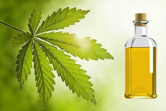 Aceite de Neen para eliminar las Plagas de la Marihuana