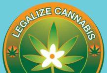 Legalización de la Marihuana Medicinal en Florida