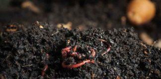 Fertilizante Humus de Lombriz