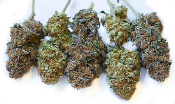 Cogollos de marihuana Grandes