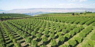 Cultivo de Marihuana Exterior - Cultivo de Marihuana Interior