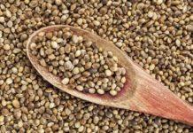 Proteína de Cáñamo - Proteínas de Semillas de Cáñamo