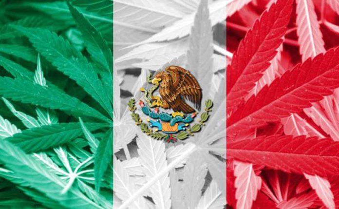 Legalización de la Marihuana en México