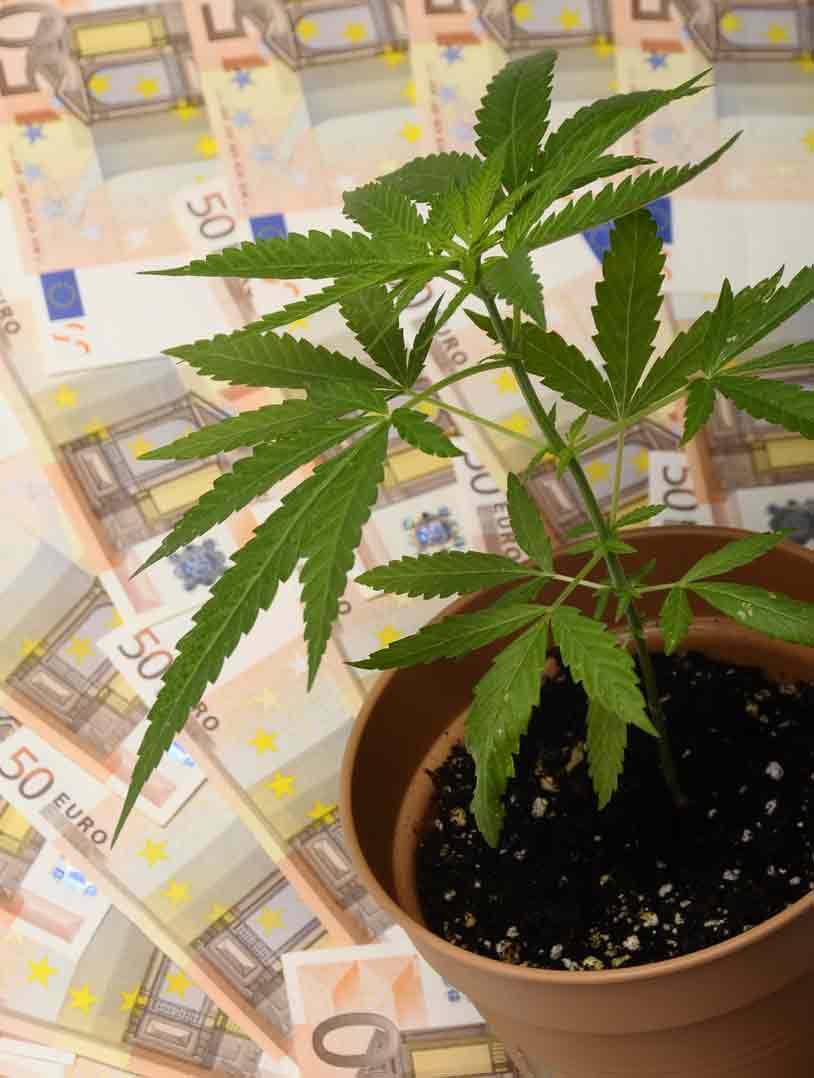 Legalización de la Marihuana - Marihuana en California