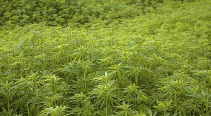 Enfermedades que Cura la Marihuana - Enfermedades Marihuana