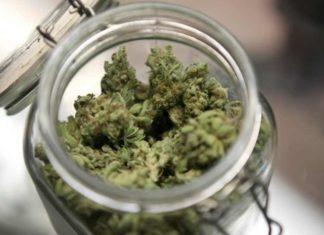 Marihuana Medicinal - Marihuana Terapéutica en México