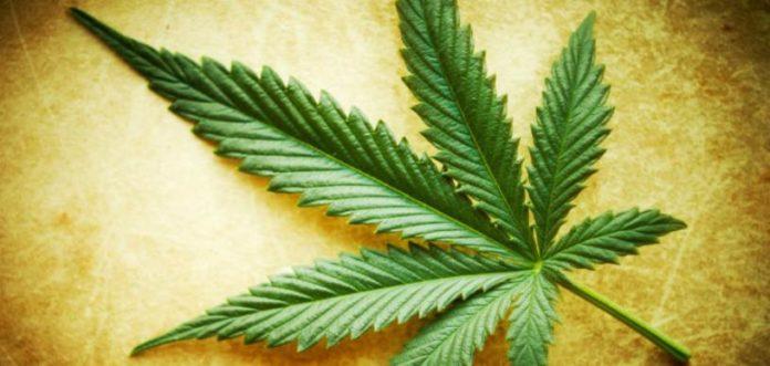 THC contra el Cáncer - Marihuana contra el Cáncer