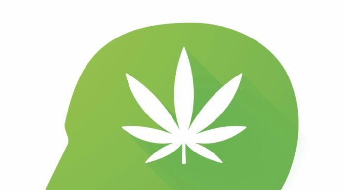 Marihuana Protege el Cerebro - Marihuana Protege las Neuronas
