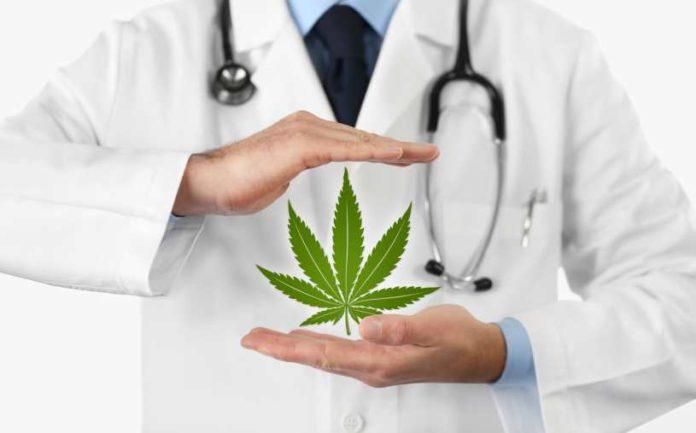 Marihuana Planta Analgésica - Marihuana Alivia el Dolor