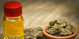 Legalización de la Marihuana - Debate sobre la Legalización