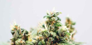 Marihuana y la Felicidad - La Marihuana proporciona Felicidad