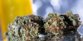 Marihuana en Farmacias - Farmacias en Uruguay con Marihuana
