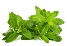 Stevia - Plantar Stevia - Cultivo de Stevia