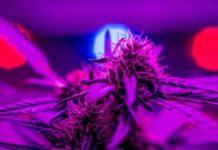 Led Cultivo Interior Marihuana - Luces Led Para Cultivo Interior de Marihuana