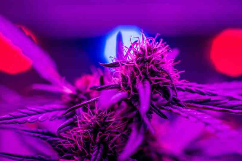 Led cultivo interior marihuana luces led para cultivo for Cultivo interior marihuana