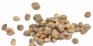 Semillas de Marihuana con THC - Semillas de Marihuana ricas en THC