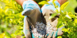 Fertilizantes Cultivo Marihuana - Fertilizantes y Estimuladores